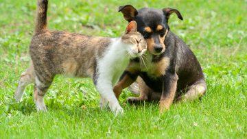 Tiergesundheit und Tierpflege